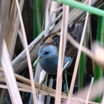 Natura 2000 din Bazinu Fizesului, modernizat pe fonduri europene