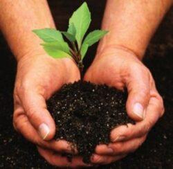 Coltul micului fermier - Plantarea pomilor