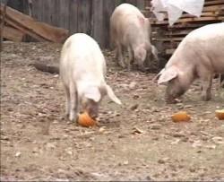 Veterinarii au verificat conditiile de bunastare si transport a animalelor in cospodariile populatiei