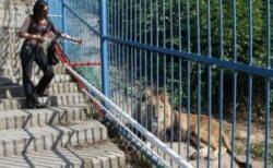 Comisia Europeana, ingrijorata de gradinile zoo romanesti. Sunt vizate felinele mari de la Craiova si elefantul Tania de la Targu-Mures