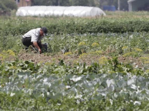 """Daniel Bot?noiu, secretar de stat, Ministerul Agriculturii : """"Avem nevoie ?i de hran?, dar în egal? masur? ?i de energie"""""""