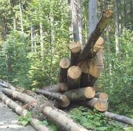 """Zalaul, gazda unui """"program antifrauda"""" in industria lemnului"""