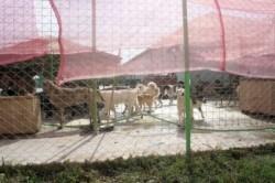Iubitorii de animale si-ar dori un targ de adoptii. Nimeni nu s-a oferit insa sa ii sprijine!