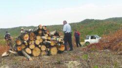 """Mugur Cozmanciuc: """"Dezvoltarea fondului forestier necesită colaborarea strânsă între administraţia de stat şi cea privată"""""""