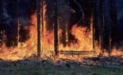 Flacarile au distrus peste 4.500 de hectare de padure in statul american Arizona