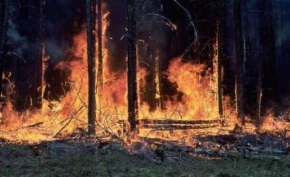 Incendiile de padure vor fi bombardate