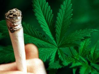 Ce se întâmpl? în creierul celor care fumeaz? marijuana?
