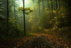 Natura 2000: potential real de dezvoltare a turismului si a agriculturii ecologica pe Valea Hartibaciului
