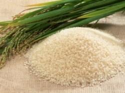 Scut impotriva tumorilor: orezul