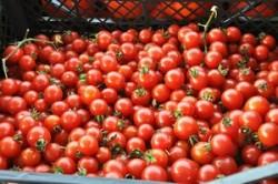 Rosiile, morcovii si usturoiul previn cancerul