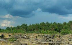 Pădurea Oltvany de lângă Pănet, Mures, va fi defrişată treptat, concomitent cu plantarea de noi specii de arbori