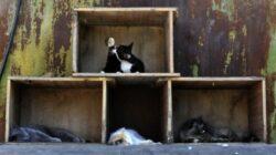 Birou Antifrauda si Politia Animalelor, infiintate la Directia Sanitar Veterinara Suceava
