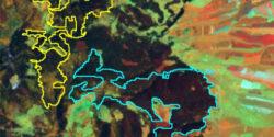 Imagini NASA confirmă dezastrul din pădurile româneşti: o suprafaţă uriaşă de molid a dispărut din Harghita în numai trei ani