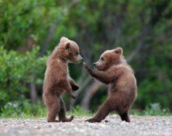 Ce cred romanii despre problemele de mediu: Doar 6% dintre ei vad in ursi o amenintare