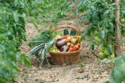 Multe alimente contin pesticide, hormoni, metale grele si alte substante care pot ucide consumatorii
