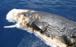 Fotografii tulburatoare realizate in vara anului 2010, in urma unei grave scurgeri de petrol din Golful Mexic