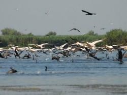 Asociatia Salvati Dunarea si Delta protesteaza impotriva numirii Vioricai Basca in conducerea Rezervatiei Biosferei Delta Dunarii