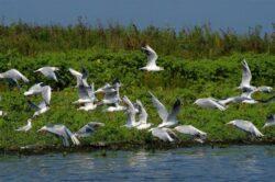 Discutii despre dezvoltarea durabila a Deltei Dunarii si certificatele de CO2 cu comisarii europeni