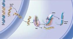 """Transformarea alimentelelor în """"medicamente"""", prin alterarea genelor"""