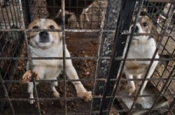 Romania, din nou in atentia presei straine, pentru tratamentul aplicat cainilor maidanezi