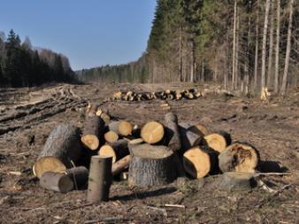 38 de deputati PSD au facut o lege care permite taierea integrala a padurilor. Zece dintre ei sunt proprietari de terenuri forestiere