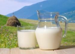 Laptele contaminat cu o toxina cauzatoare de cancer provoaca panica in Balcani