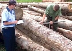 Incasarile Romaniei din exploatarea lemnului se ridica la aproape 1,4 miliarde de lei, in 2012