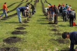 78.750 copacei plantati de voluntari in ultimii doi ani