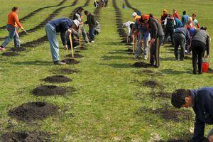 "Actiunea de plantare de puieti sub deviza ""Eroii - vesnic vii"" continua"