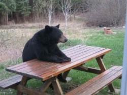 """Dragoş Ciomag, şeful Direcţiei Silvice Prahova: """"După ce trec de un anumit nivel al coniacului, oamenii se duc să discute cu ursul şi apar probleme"""""""