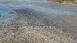 Responsabilul dezastrului ecologic din comuna Focuri a fost amendat