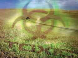 Povestea orezului auriu. Ne distrugem viitorul prin neacceptarea plantelor modificate genetic