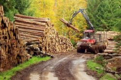 """Ministrul Lucia Varga se intalneste cu silvicultorii aradeni si avertizeaza: """"Nu putem tolera oameni care au permis furtul"""""""