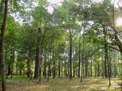 A fost promulgata Legea privind impozitul de 0,5% pentru veniturile obtinute din exploatarea forestiera