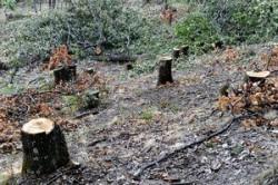 Unde au disparut padurile din Romania