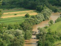 Rezervatie din Romania unica in Europa, in risc maxim de disparitie