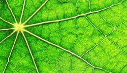 Imre Vass (cercetator): Energia prin fotosinteza, de 20 de ori mai mare decat nevoile noastre