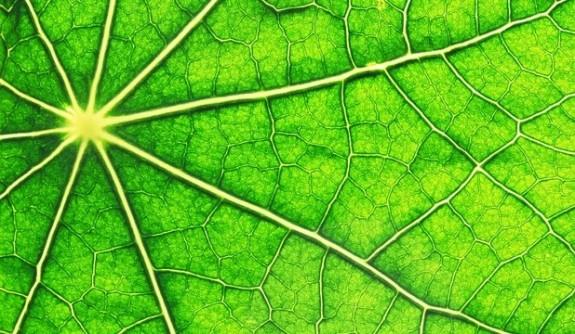 Imre Vass (cercet?tor): Energia prin fotosintez?, de 20 de ori mai mare decât nevoile noastre