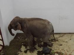 Petiţie pe internet pentru eliberarea Taniei, elefănţica de la Zoo Târgu Mureş