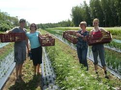 Oportunitati de voluntariat in ferme ecologice din toata lumea