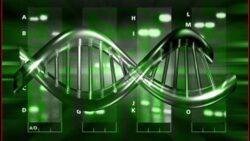 Cat de mult este influentat ADN-ul de mediu si de alimentatie