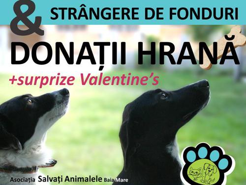 Asociatia Salvati Animalele din Baia Mare da startul unei campanii de strangere de fonduri si alimente pentru cainii