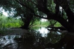 """""""Natura fara frontiera"""", proiect de aproape 400.000 de euro"""
