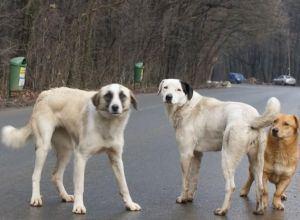 Campanie pentru promovarea drepturilor animalelor de companie abandonate
