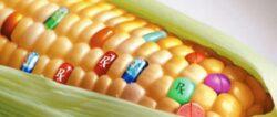 "Americanii se resemneaza cu plantele modificate genetic, ""dar macar sa scrie mare pe eticheta"""