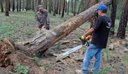 """WWF Romania:""""Lobby-ul economic, incomparabil mai puternic decat cel de mediu"""""""