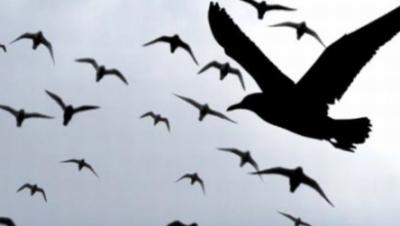 Cum se ghidează păsările