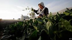 Cererile pentru subventia din agricultura ecologica se pot depune pana la 29 noiembrie