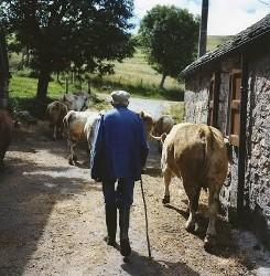 Cererea de piata salveaza agricultura ecologica romaneasca