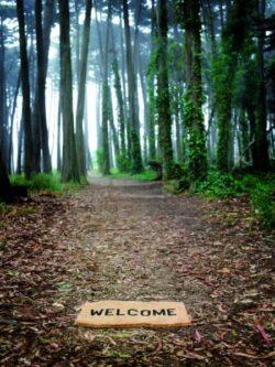 Oportunităţile lui 2013. Terenurile şi pădurile, noul boom